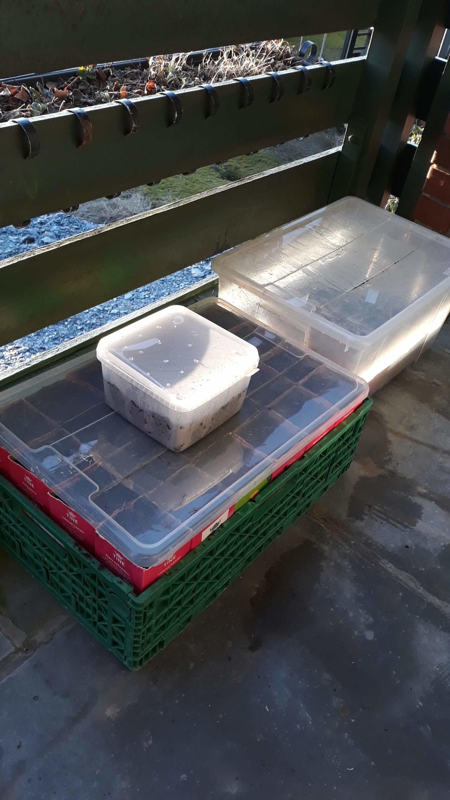 Dyrking i plast kasser